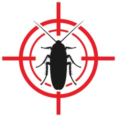 Eliminating Bugs