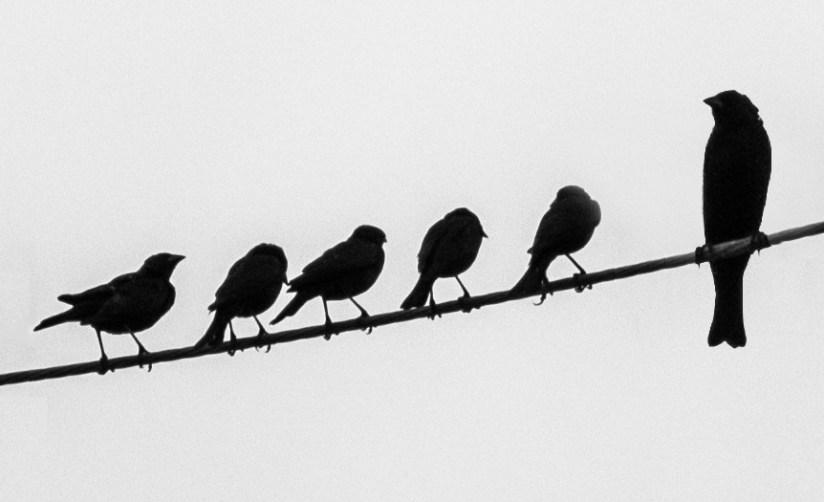 Little birds and big bird on wire