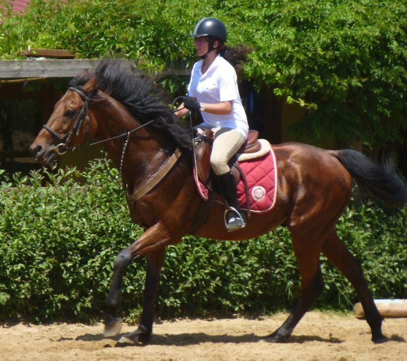 Horse Riding forward