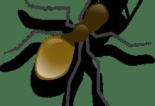 Ant/pixabay