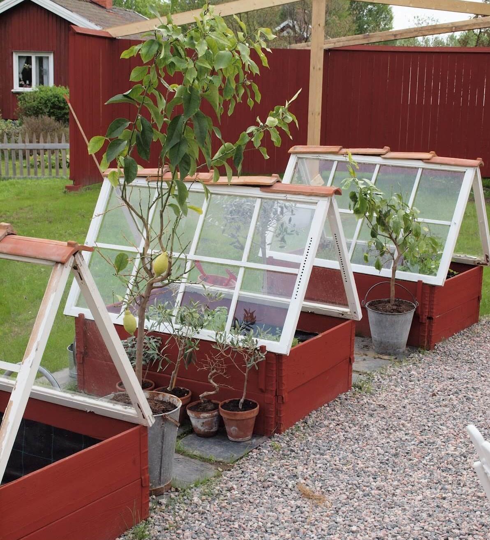 Salvaged Windows. Greenhouse