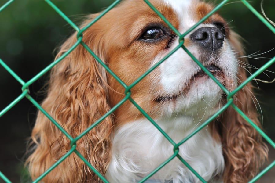 Dog Fencing Options