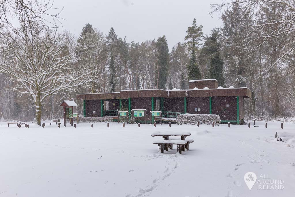 Thick snow in Portumna Forest Park