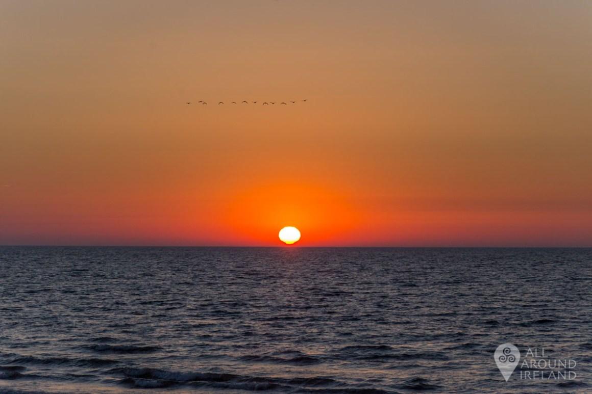 A line of birds fly over the rising sun at Curracloe Beach