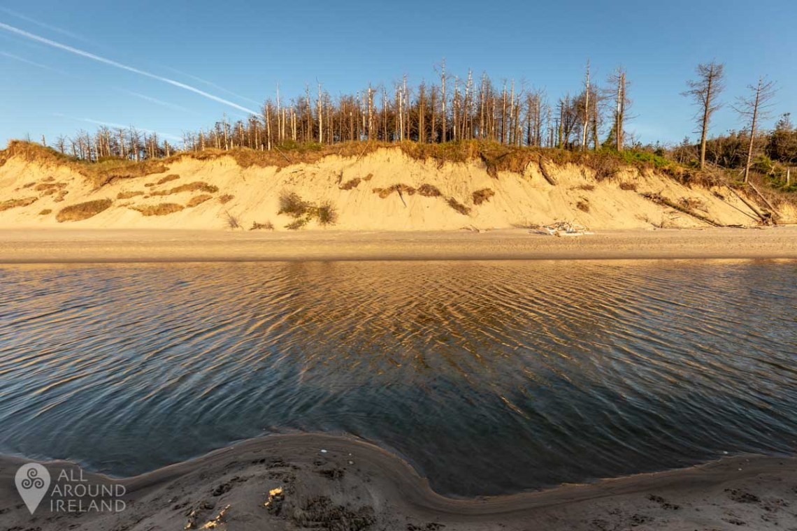 Curracloe beach flanked by Raven Wood Nature Reserve.