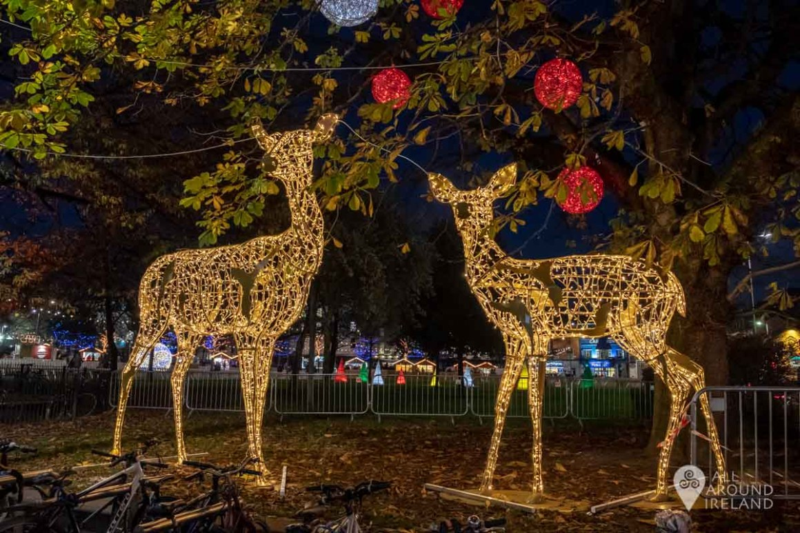 Two giant deer lit up at the Galway Christmas Market