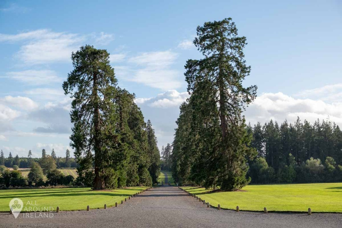 The avenue at Emo Court lined with tall trees.
