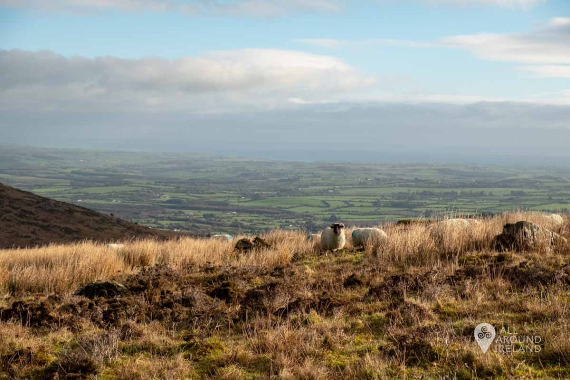 Some sheep in the foreground and stunning views out to sea from the start of the Mahon Falls walk.