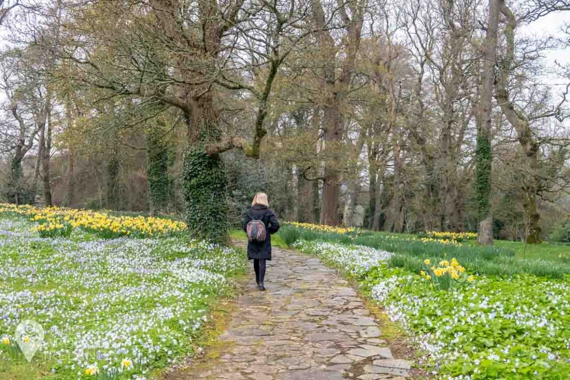 Daffodils and wildflowers brighten up our walk at Mount Juliet