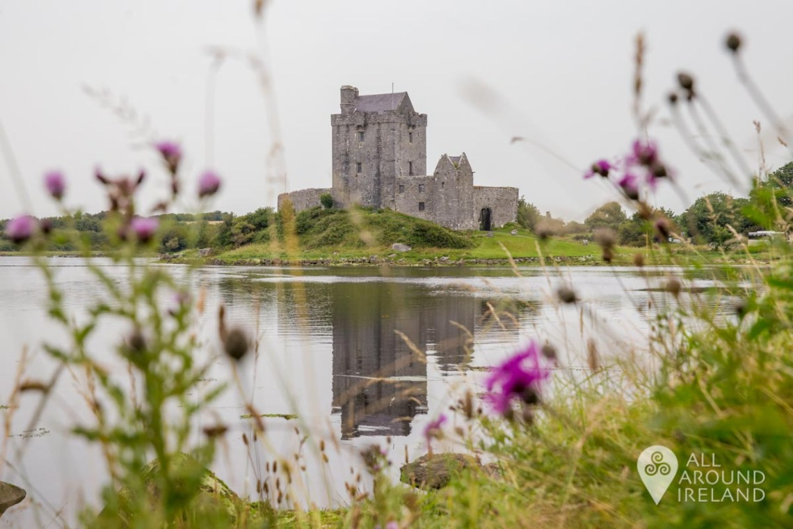 Dunguaire Castle in Kinvara, a gateway to the Burren. The castle is reflected in the water of the bay on a grey, dull day but some pink wild flowers provide a pop of colour in the foreground.