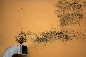 common causes of mold