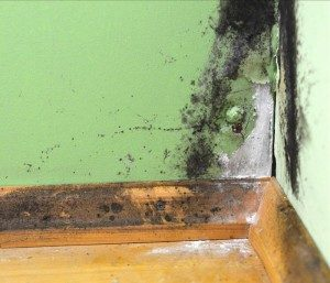 Mold in your rental property