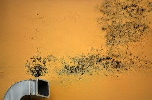 what mold needs to grow all aspects waterproofing