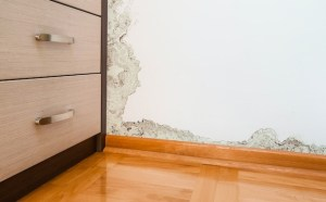 Finding the Right Mold Remediation Specialist