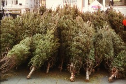 Picking out a tree at the corner Christmas tree lot may be a romantic holiday tradition. But as Joey Spehar can tell you, selling trees is a lot of work. Photo: elzbieta1986 via Flickr