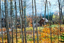 Writer and photographer Debra Lynn Hook spent two and a half weeks in a rustic cabin on 200 acres of Michigan forestland. Photo: Debra Lynn Hook