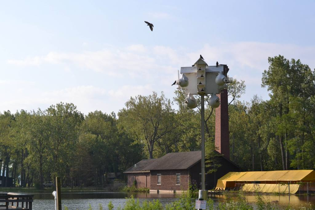 One of the Purple Martin Conservation Association's nest boxes near the Rotary Pavilion at Preque Isle. Photo: Jack Austin/The Allegheny Front