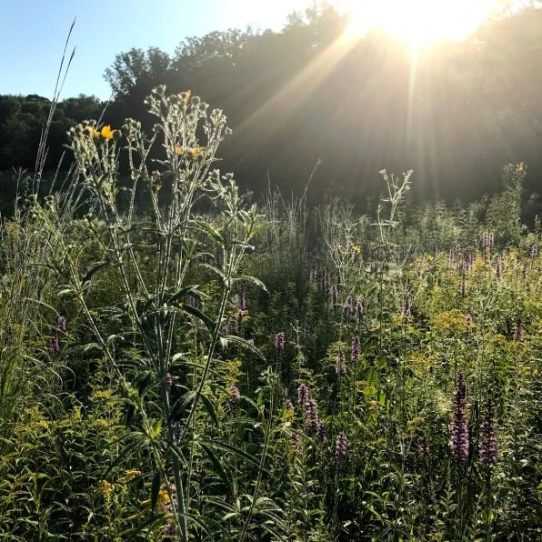 Prairie dew