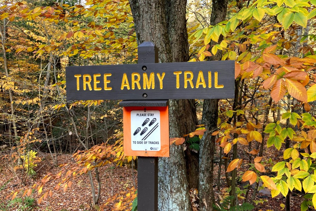 Tree Army Trail