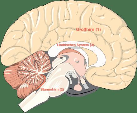Gehirn_mit
