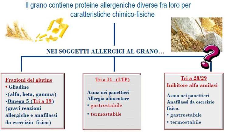 allergia_molecolare_grano