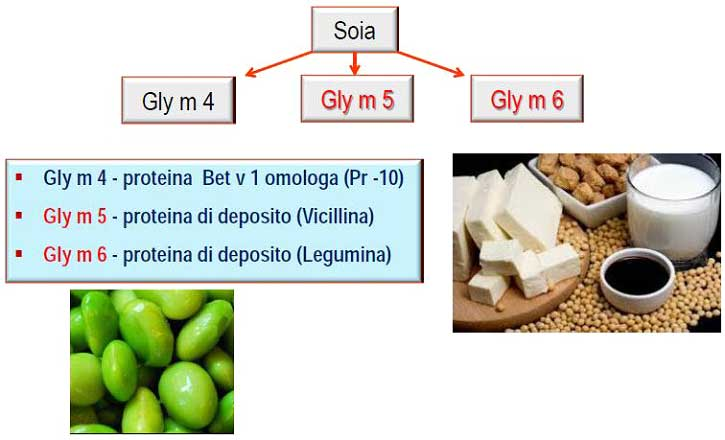 allergia_molecolare_soia