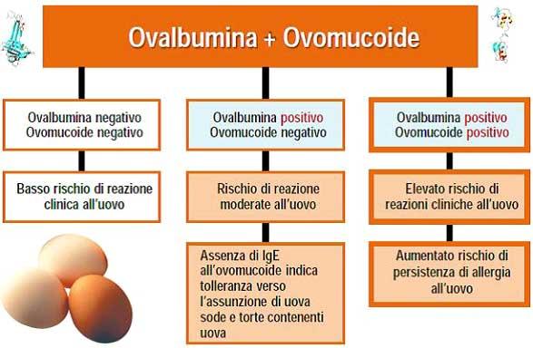 ovalbumina_ovomucoide