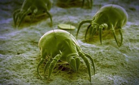 sbarazzarsi di parassiti nei seni paranasali