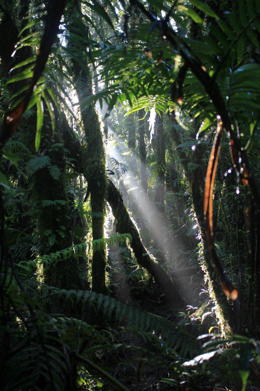Dschungel im Inselinneren von Camiguin