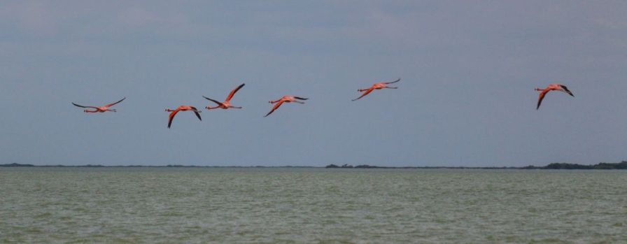 Fliegende Flamingos in Las Coloradas