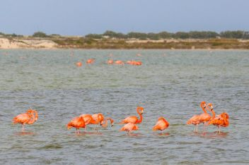Flamingogruppe in Las Coloradas