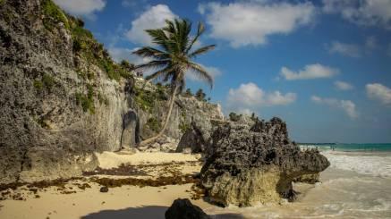 Eine Palme am Strand von Tulum