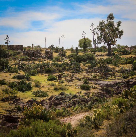 Natur in der Umgebung von Real de Catorce