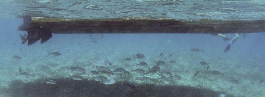 Fische unter Wasser, Caye Caulker
