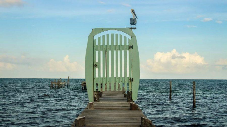 Pelikan auf Caye Caulker
