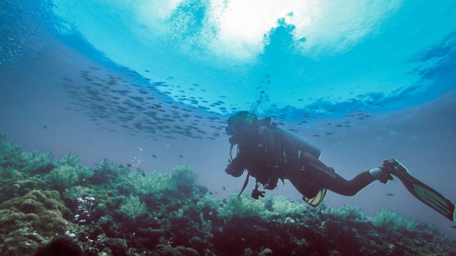 Unter Wasser in Malapascua