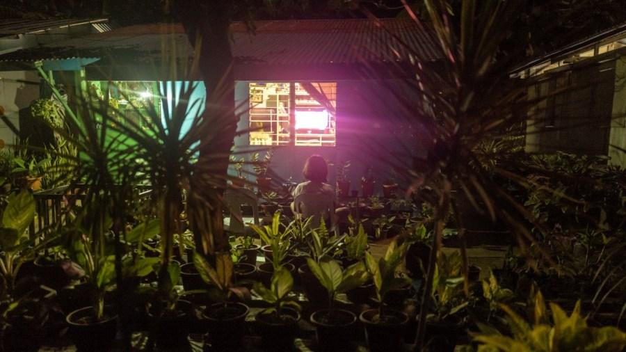 Garten in Malapascua Island