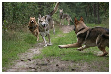 hondenoppas5