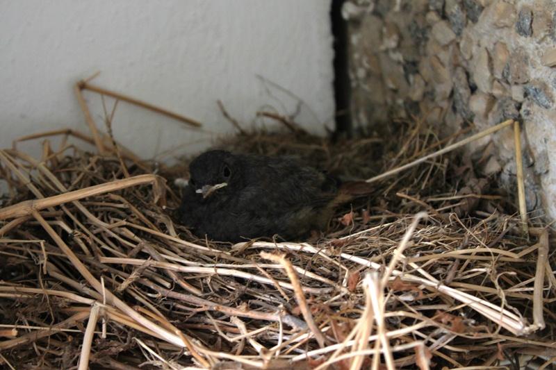 Die letzten Minuten im Nest