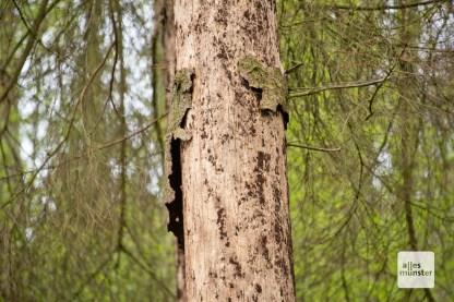 Dieser Baum hat keine Überlebenschance mehr.