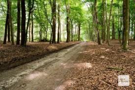 Die Tour bietet wunderschöne Waldabschnitte