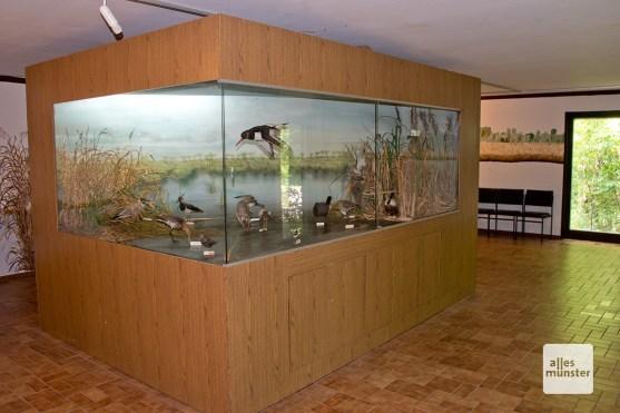 In der Biologischen Station gibt es eine öffentliche Sammlung mit Infos zu den Tieren der Rieselfelder. (Foto: Michael Bührke)