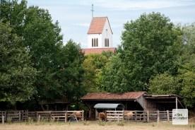 Bei der Bauerschaft Hansell gibt es Münsterland pur. (Foto: Michael Bührke)