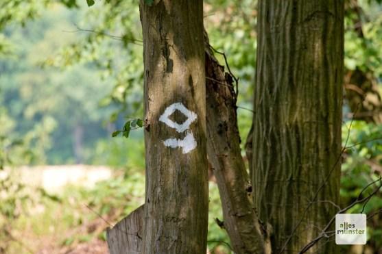 Sowohl in der Davert als auch in der Hohen Ward gibt es mehrere Wanderwege. (Foto: Michael Bührke)