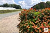 Blumenschmuck an der Strecke