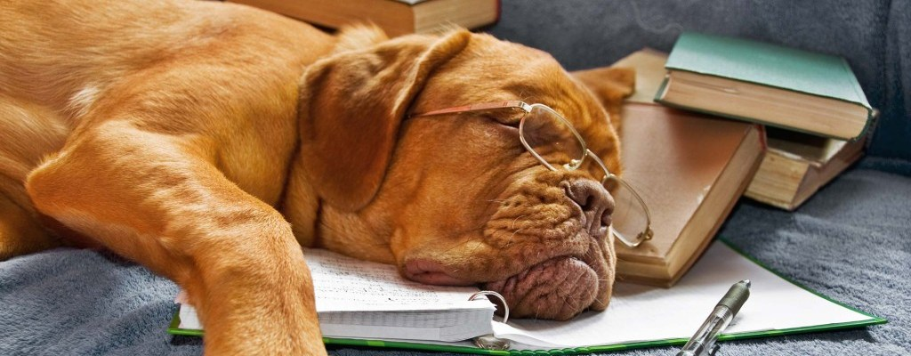 dog tired of learning