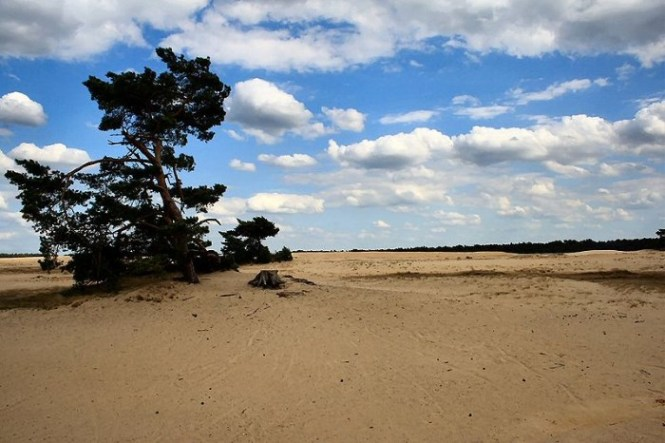 Hoge Veluwe Nationaal Park - TOP 10 TOURIST ATTRACTIONS AND THINGS TO DO IN THE NETHERLANDS