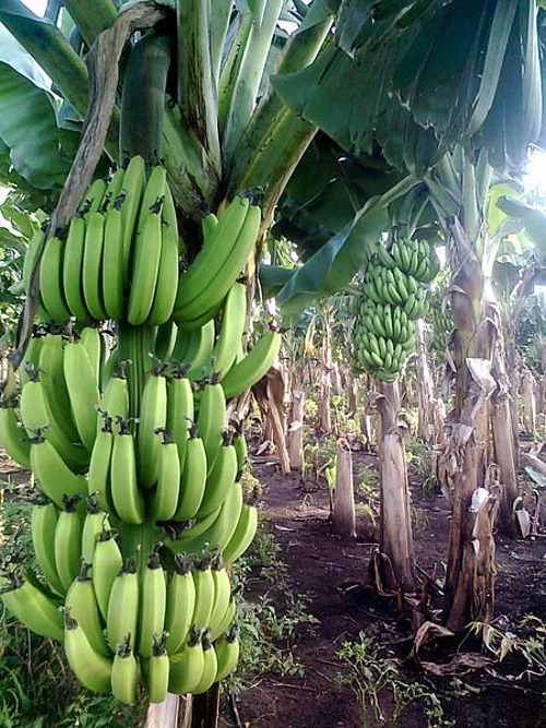bananenboom - TOP 10 Scientific Myths That Are Not True!