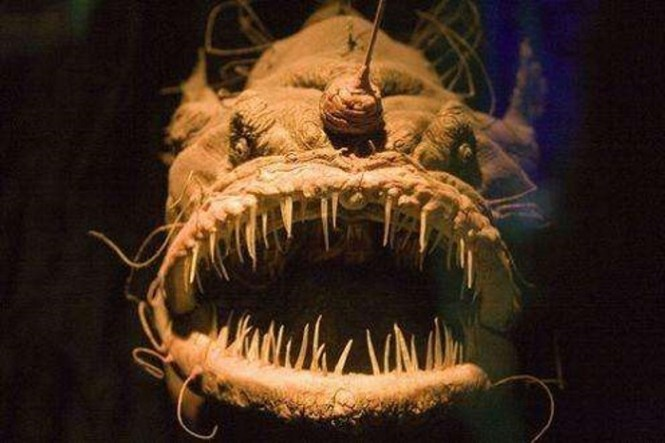 hengelvis - TOP 10 MOST DANGEROUS AND SCARIEST SEA CREATURES