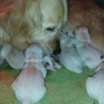 Eccoli qui, i nuovi nati!